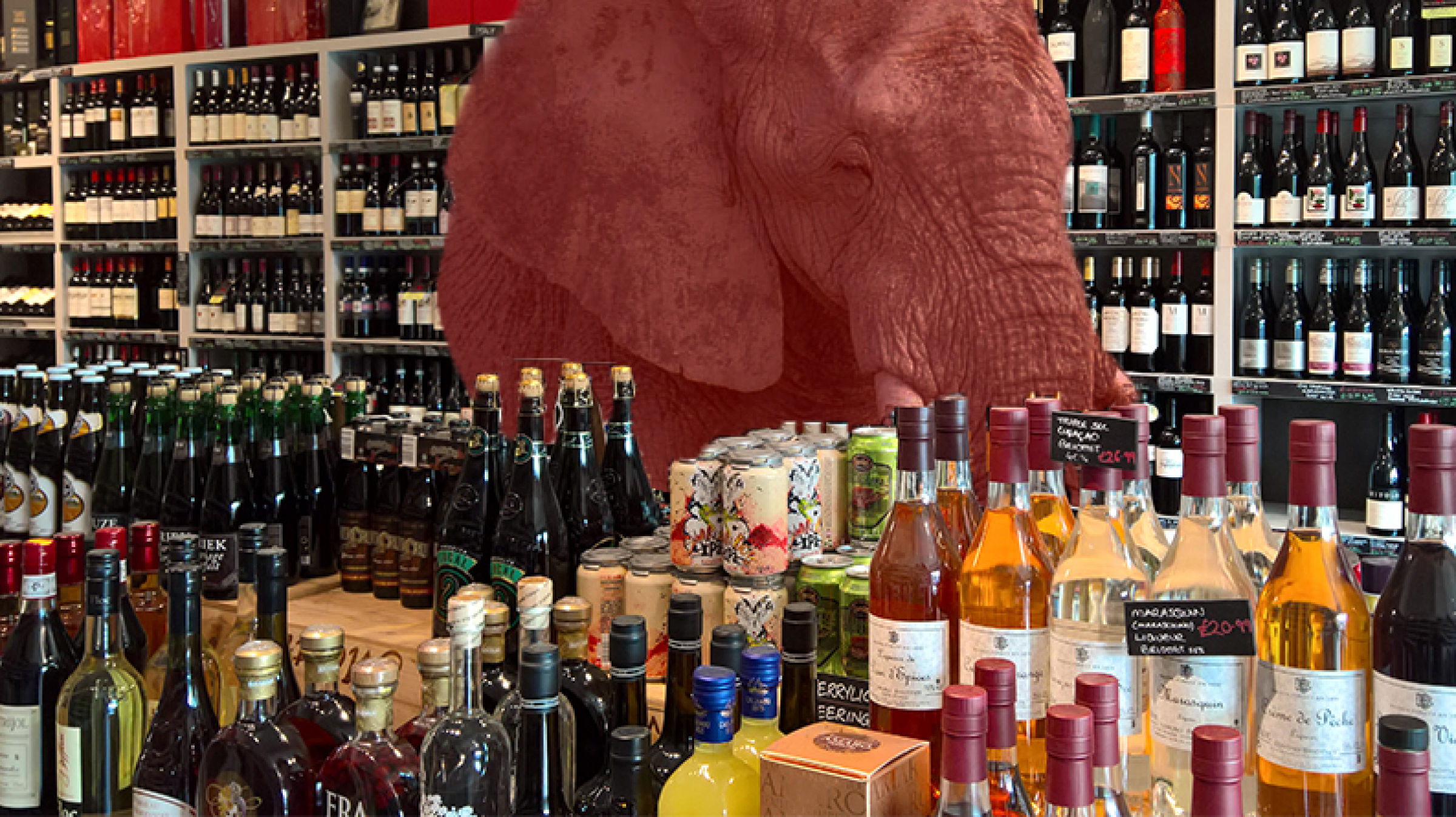Elephant in a Wine Shop
